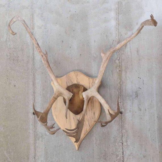 antlers1